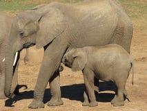 Nahaufnahme eines Mutter- und Babyelefanten Lizenzfreies Stockbild