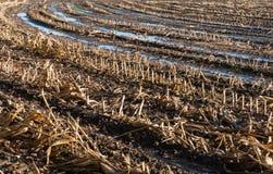 Nahaufnahme eines nassen Stubblefeldes im Herbst Stockfotos