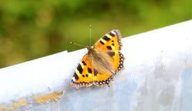 Nahaufnahme eines orange und schwarzen Schmetterlinges in der Natur Lizenzfreie Stockfotos