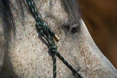 Nahaufnahme eines Pferds Stockbild