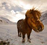 Nahaufnahme eines Pferds, das im Schnee stading ist Lizenzfreies Stockbild