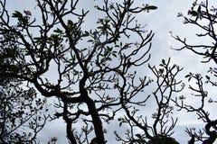 Nahaufnahme eines schönen Baums am Affeberg Khao Takiab in Hua Hin, Thailand, Asien Stockbilder