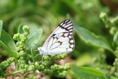 Nahaufnahme eines Schmetterlinges, der auf einem Blatt sitzt lizenzfreie stockfotografie