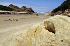 Nahaufnahme eines Shells auf einem Strand Stockbilder