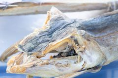 Nahaufnahme eines Stockfischkopfes, Spezialität der italienischen Küche stockfotografie