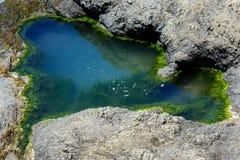 Nahaufnahme eines tidepool gefüllt mit Wasser in den Felsen durch den Ozean, eingefaßt mit Grünalgen Die Algen erscheint als Mini stockfotos