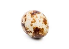 Nahaufnahme eines ungekochten Wachteleies, lokalisiert auf einem weißen Hintergrund Organisches und Naturprodukt Gesundes Nahrung Stockfotos