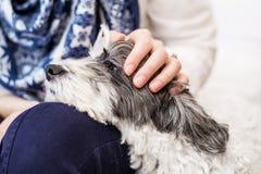 Nahaufnahme eines weißen Hundes in einer Frau umarmt Lizenzfreies Stockbild