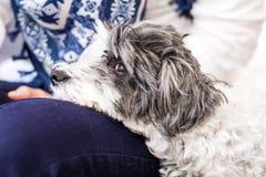 Nahaufnahme eines weißen Hundes in einer Frau umarmt Stockfotos