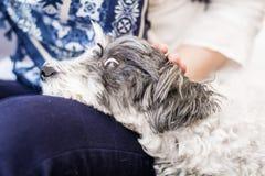 Nahaufnahme eines weißen Hundes in einer Frau umarmt Lizenzfreie Stockfotos