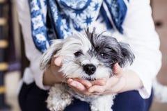 Nahaufnahme eines weißen Hundes in einer Frau umarmt Stockbilder