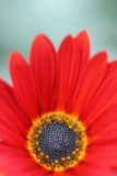 Nahaufnahme eines wenig roten grünen Hintergrundes der Blume und der Unschärfe Stockfotografie