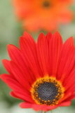 Nahaufnahme eines wenig roten grünen Hintergrundes der Blume und der Unschärfe Stockfoto
