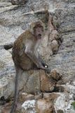 Nahaufnahme eines wilden Affen auf einem Stein am Affeberg Khao Takiab in Hua Hin, Thailand, Asien Lizenzfreies Stockfoto