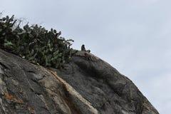 Nahaufnahme eines wilden Affen, der auf einem Stein am Affeberg Khao Takiab in Hua Hin, Thailand, Asien sitzt Lizenzfreies Stockbild