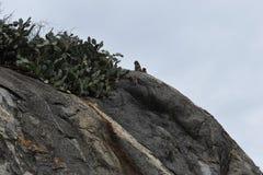 Nahaufnahme eines wilden Affen, der auf einem Stein am Affeberg Khao Takiab in Hua Hin, Thailand, Asien sitzt Stockbild