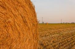 Nahaufnahme eines zylinderförmigen Ballens des Heus in einem Ackerland Stockbilder