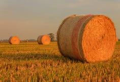 Nahaufnahme eines zylinderförmigen Ballens des Heus in einem Ackerland Stockfotografie