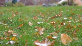 Nahaufnahme-erster Schnee, der auf das grüne Gras mit gefallenen Blättern, Zeitlupe fällt stock video