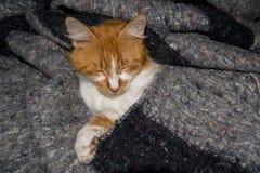 NAHAUFNAHME-FOTOGRAFIE GELBEN CAT BEQUEM SCHLAFEND AUF EINEM BETT stockfotos