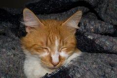 NAHAUFNAHME-FOTOGRAFIE GELBEN CAT BEQUEM SCHLAFEND AUF EINEM BETT lizenzfreies stockfoto