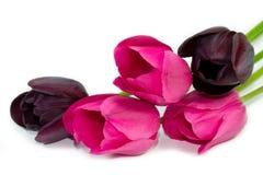 Nahaufnahme Frühlingsdes mehrfarbentulpenblumenstraußes Stockbild