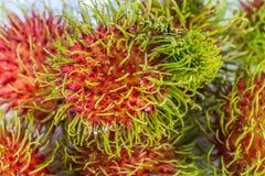 Nahaufnahme frischer Rambutan ist eine Frucht mit süßem rotem Oberteil lizenzfreie stockfotografie