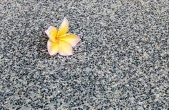 Nahaufnahme gefallene gelbe Blume auf schwarzem Marmorsteinbodenbeschaffenheitshintergrund Stockfoto