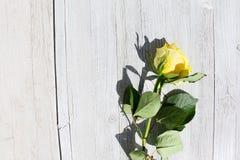 Nahaufnahme - gelbe Rose auf einem Hintergrund des alten Holzes stockfotografie