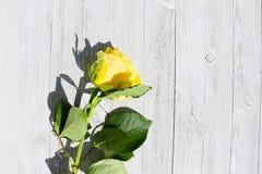 Nahaufnahme - gelbe Rose auf einem Hintergrund des alten Holzes stockbilder