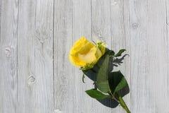 Nahaufnahme - gelbe Rose auf einem Hintergrund des alten Holzes lizenzfreies stockfoto