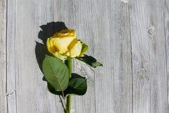 Nahaufnahme - gelbe Rose auf einem Hintergrund des alten Holzes lizenzfreie stockfotos