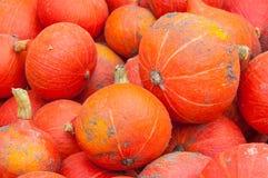 Nahaufnahme gerade der geernteten orange Kürbise Lizenzfreie Stockfotos