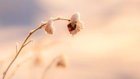 Winter-Schönheit Lizenzfreie Stockbilder