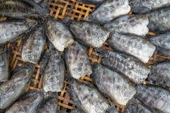 Nahaufnahme getrockneten snakeskin Gourami auf dem Bambusbehälter angezeigt am lokalen Markt stockfotos
