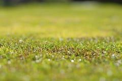 nahaufnahme Grüner Busch Grün lässt Wand stockfoto