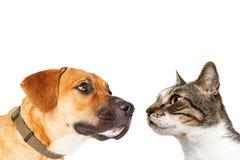 Nahaufnahme-Katze und Hund, die sich gegenüberstellen Lizenzfreie Stockfotos