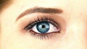 Nahaufnahme-Makroschuß des weiblichen menschlichen Auges, das 4K blinkt stock video