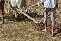 Nahaufnahme mit den Ochsen, die Landwirt, Äthiopien pflügen Lizenzfreie Stockbilder