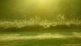 Nahaufnahme-Morgen-Gras-Blätter, Dawn Winter Sun Lizenzfreie Stockfotos