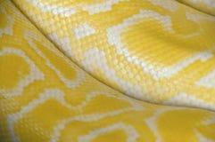 Nahaufnahme-Pythonschlangenhaut Stockfotografie