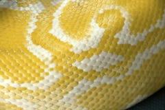 Nahaufnahme-Pythonschlangenhaut Lizenzfreie Stockbilder