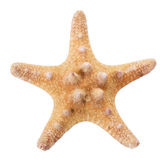 Nahaufnahme Starfish Stockfotos