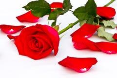 Nahaufnahme und schönes Rot rosafarbenes Thailand Lizenzfreies Stockbild
