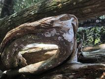 Nahaufnahme verwittertes Holz auf Chassahowitzka-Fluss Stockbild