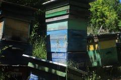 Nahaufnahme von Bienenstöcken Stockfotos