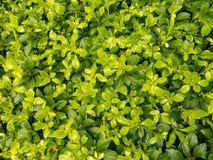 Nahaufnahme von Blättern Stockfoto