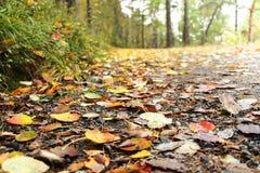 Nahaufnahme von Blättern auf einem Fallschotterweg Lizenzfreie Stockfotos