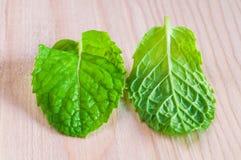 Nahaufnahme von Blättern der frischen Minzen Lizenzfreies Stockfoto