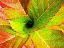Nahaufnahme von bunten hellen Blättern Stilisierte Malerei Stockfoto